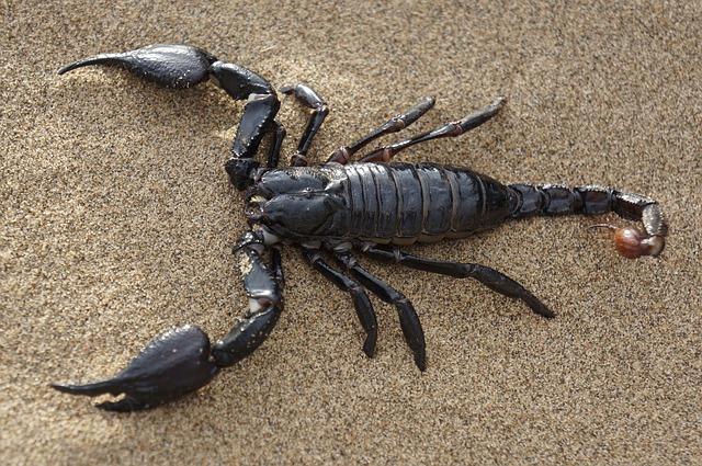 scorpion-pest-control-services